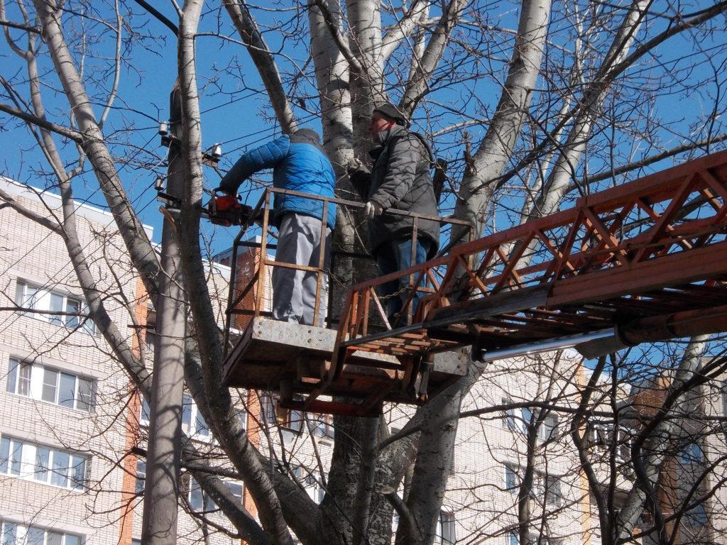 обрезка деревьев профессионально